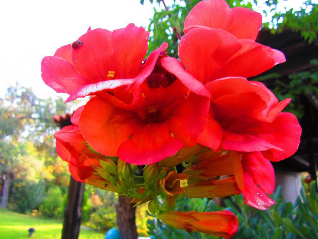 garden-photo4