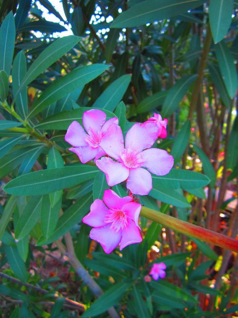 garden-photo5