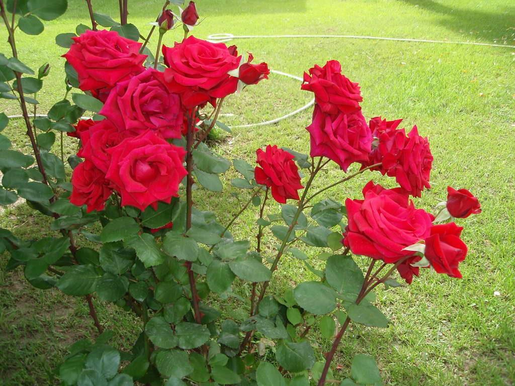 garden-photo8